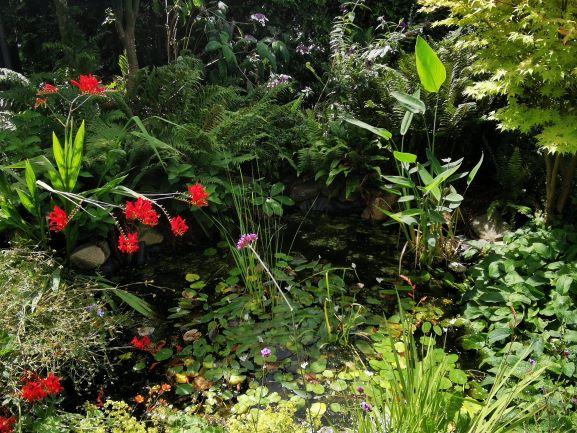 Natuurlijke vijver in tuin